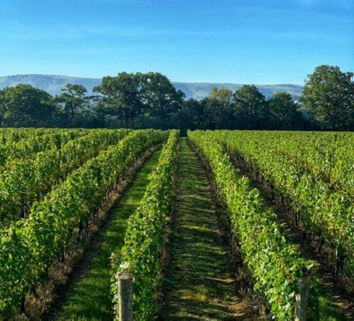 Ridgeview crowned one of the World's best Vineyards