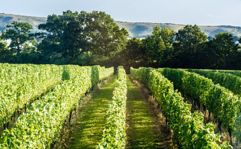 Vineyard Experiences – A Place for Everyone